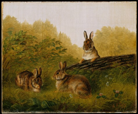 Rabbits on a log