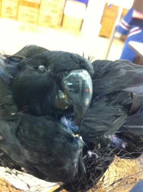 A parrot head!